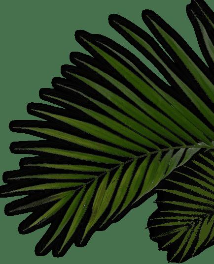 detier leaf1